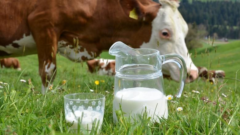 Segudang Manfaat Kesehatan Yang Bisa Didapat Dari Susu Sapi